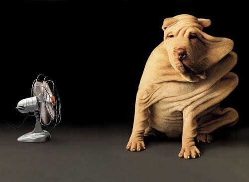 a dog in front of a fan